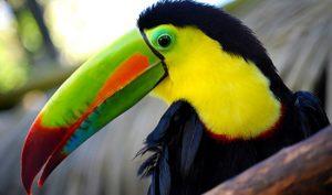 tours-bird