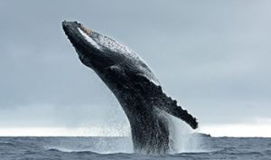 tours-whaleWatching